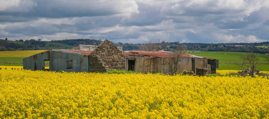 Inverlochy Castle Hotel Ruins with Canola - 2019