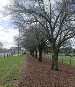 Wallan Avenue of Honour