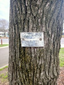 Name Plaque on Wallan Avenue of Honour tree