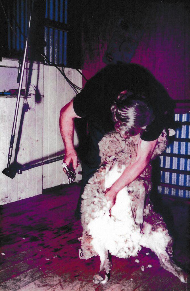 Shearing demonstration at Wallan Woolshed